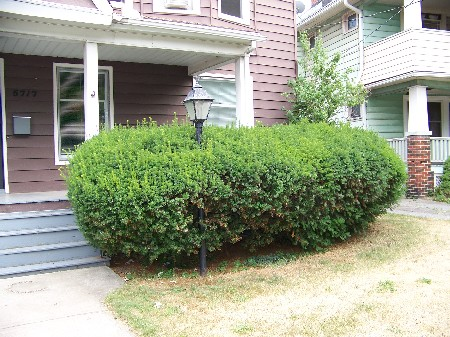 The bushes that tried to eat the porch